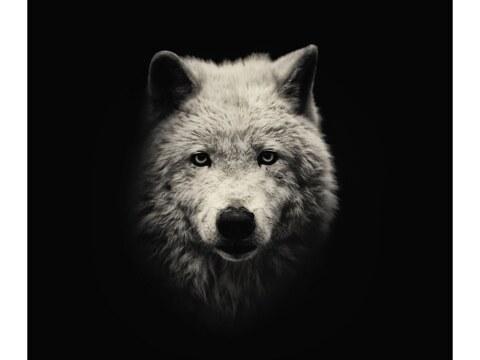 Tiere aus der Schattenwelt