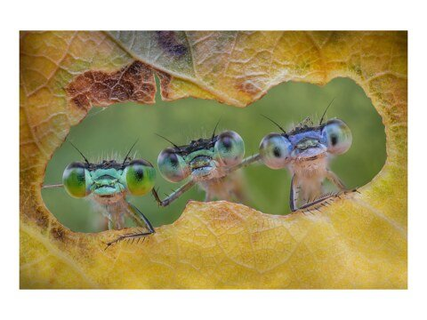 Neugierige Libellen