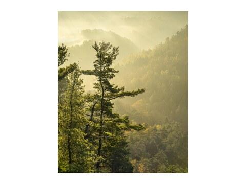 Basteiaussicht im Nebel Elbsandsteingebirge
