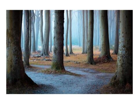 Gerahmter Wald