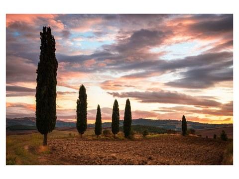 Zypressenblick in der Toskana