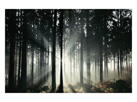 Lichtstrahlen im Teutoburger Wald