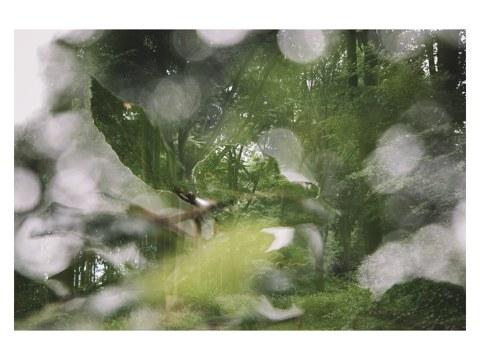 Sommer im Teutoburger Wald