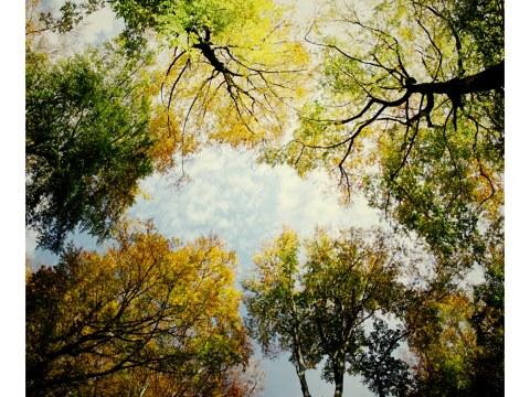 Farbenfroher herbstlicher Himmel im Teutoburger Wald