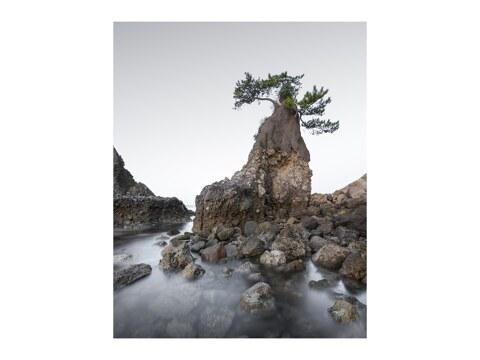 Oita Tree Japan