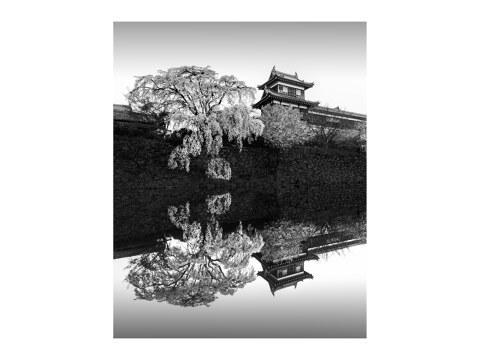 Sakura Koriyama Japan