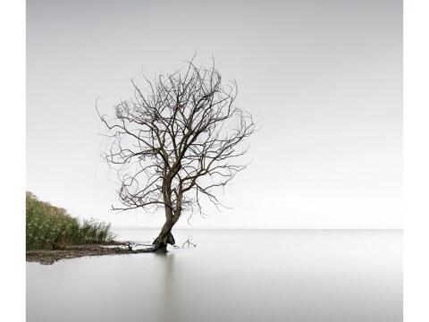 Trasimeno Tree Umbrien