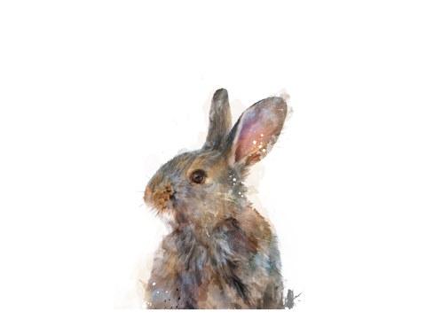 Abstract Rabbit