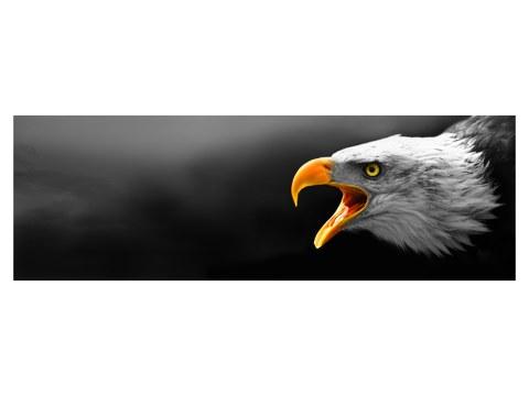 Adler Bild