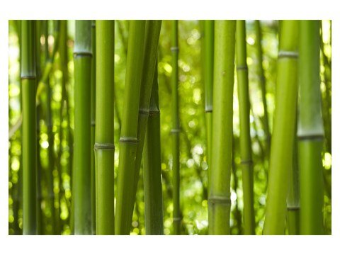 Bambusbilder