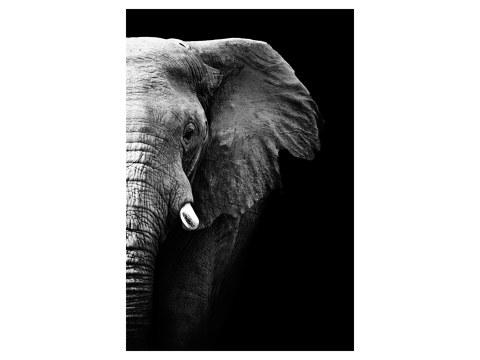 Bild Elefanten