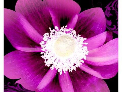 Bild mit Blume