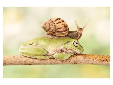 Schnecke auf Frosch