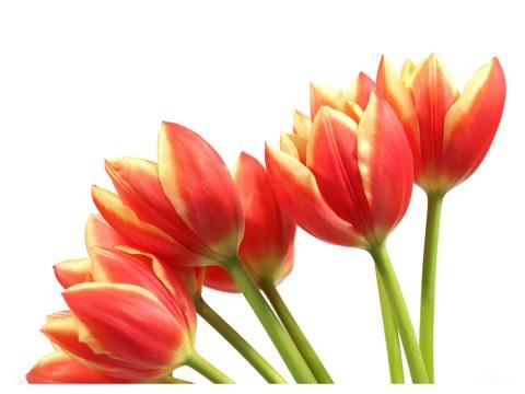 Tulpen Strauß