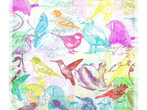 Bild Vögel Pop Art