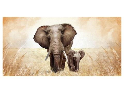 Bilder von Elefanten