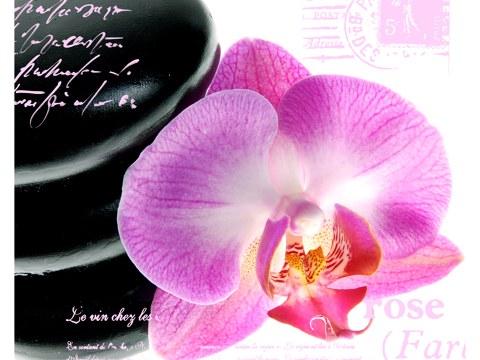 Bilder Orchideen