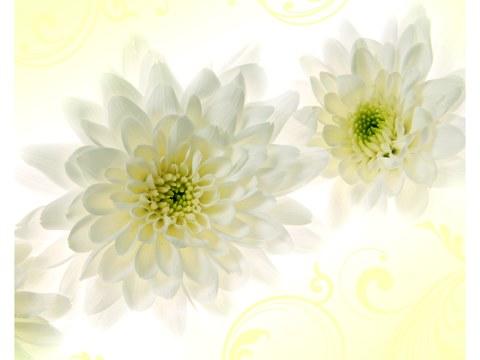 Bilder von Blumen
