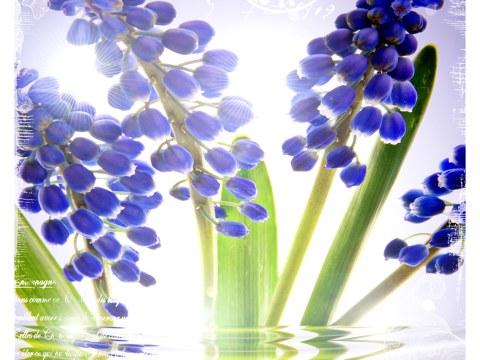 Blaue Blumen Bilder