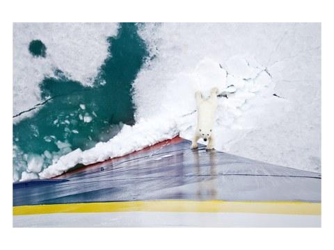 Eisbär gegen Eisbrecher
