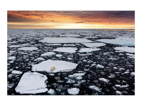 Eisbär Bild