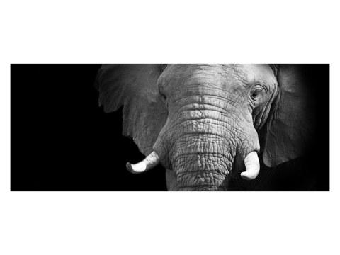 Elefanten Panorama