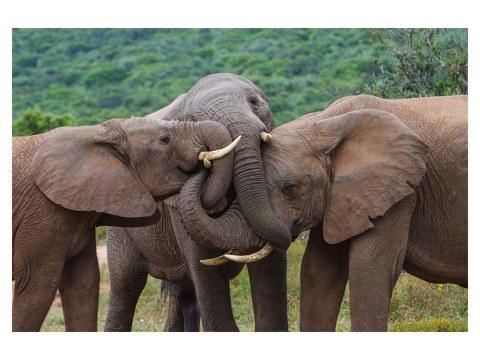 Elefantenbilder