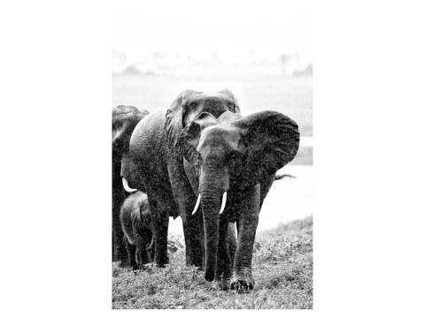 Elephanten Foto