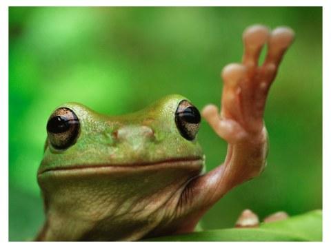 Frosch Bild