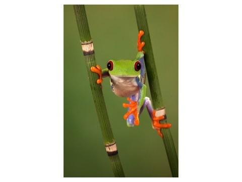 Froschbild