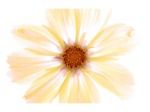 Gelbe Blumen Bilder