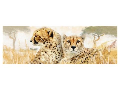 Gepard Bild