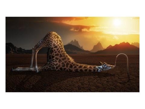 surreales Giraffen Motiv