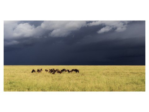 Serengeti Foto