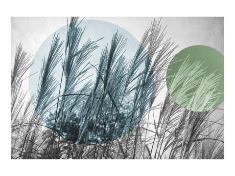 Gras Popart