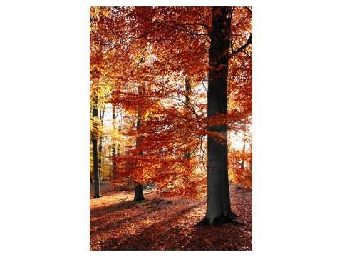 Herbstbild