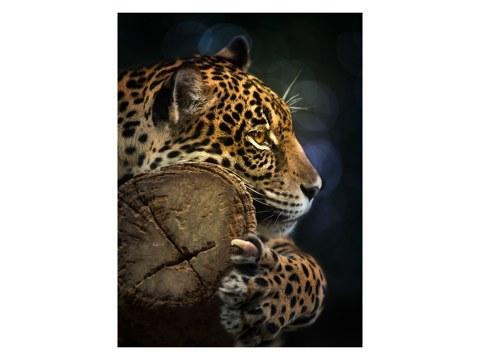 Jaguar Foto