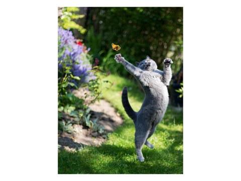 Katzen Bild