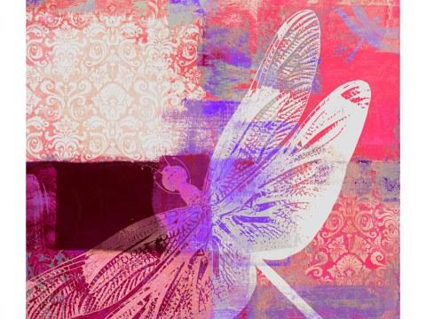 Libelle Bild