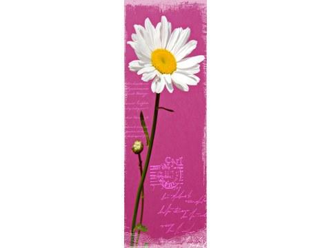 Lila Blumen Bilder