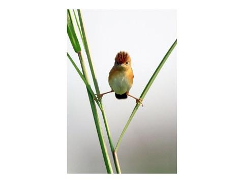 Lustige Vogelbilder