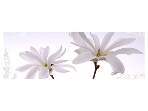 Magnolie Bilder