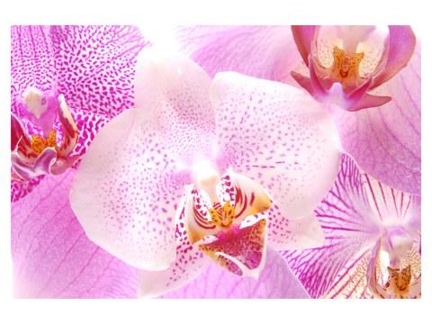 Orchidee Bilder