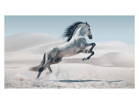 Pferd Bild