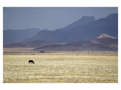 Pferd Panorama