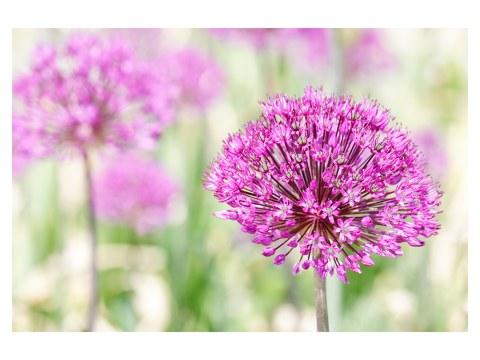 Pinkes Blumenbild