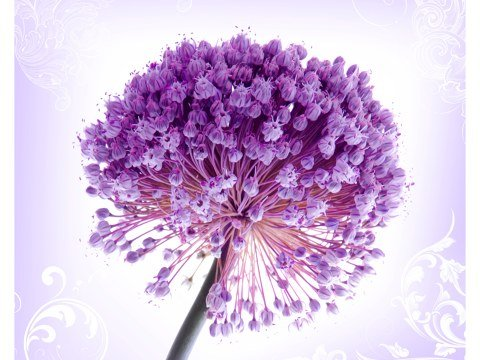 Poster Blumenmotive