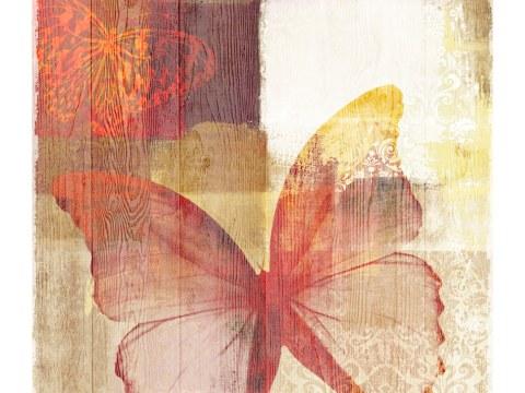 Schmetterling Bild