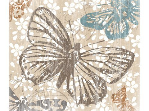 Schmetterlinge Bild