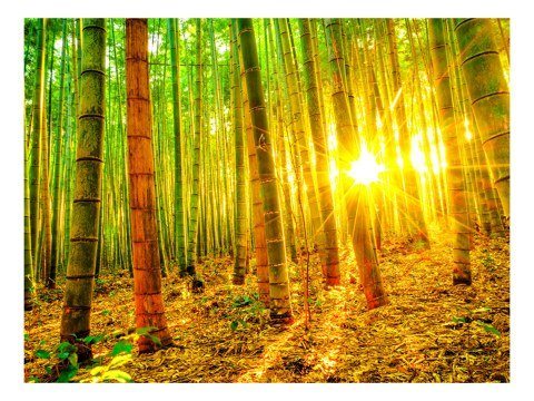 Sonnenstrahlen im Bambuswald